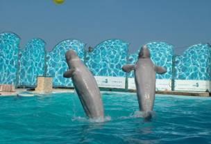 Театр морских животных Акватория